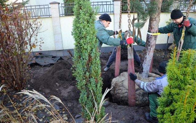 Planting big trees and decorative bushes